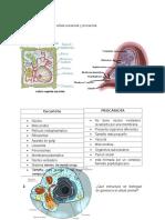Diferencia entre célula eucariota y procariota