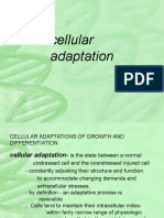 Lecture on Cellular Aberration Biology