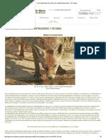 Curiosidades Ecológicas_ Depredadores y Víctimas