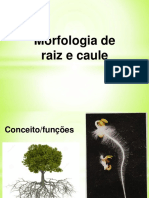 Morfologia de Raiz e Caule