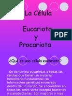Celulas Eucariotas y Procarotas