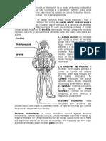 Guia Del El Sistema Nervioso 4to b.