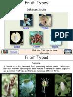 Fruit Types de His Cent