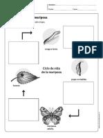 Ciclo de La Mariposa
