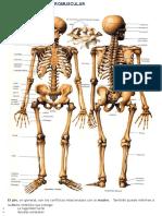 SÍNTOMAS OSTEOARTROMUSCULAR