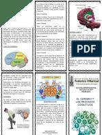 El Cerebro y Los Procesos Cognitivos