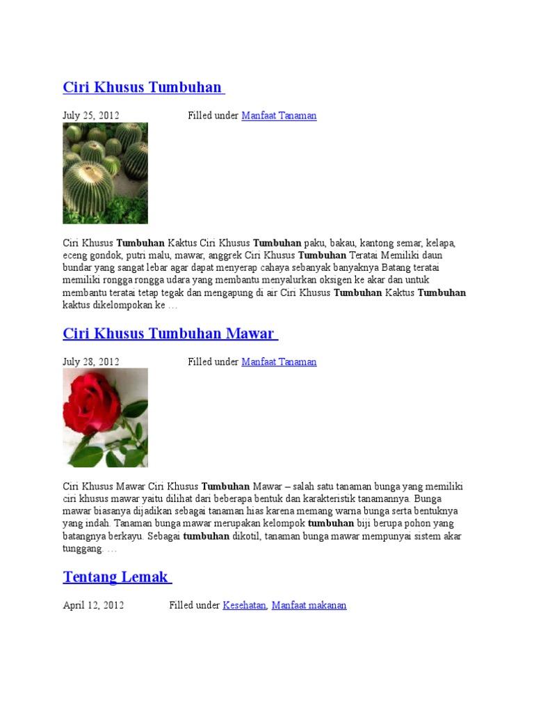 101+ Gambar Bunga Mawar Dan Ciri Khususnya Terlihat Keren