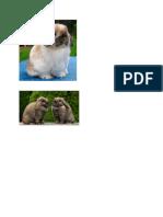 kelinci seluler.docx