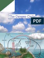 TheOxygenCycle_1
