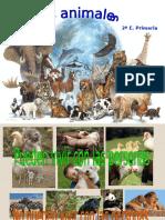 Losanimales2 Copia 130113154758 Phpapp01