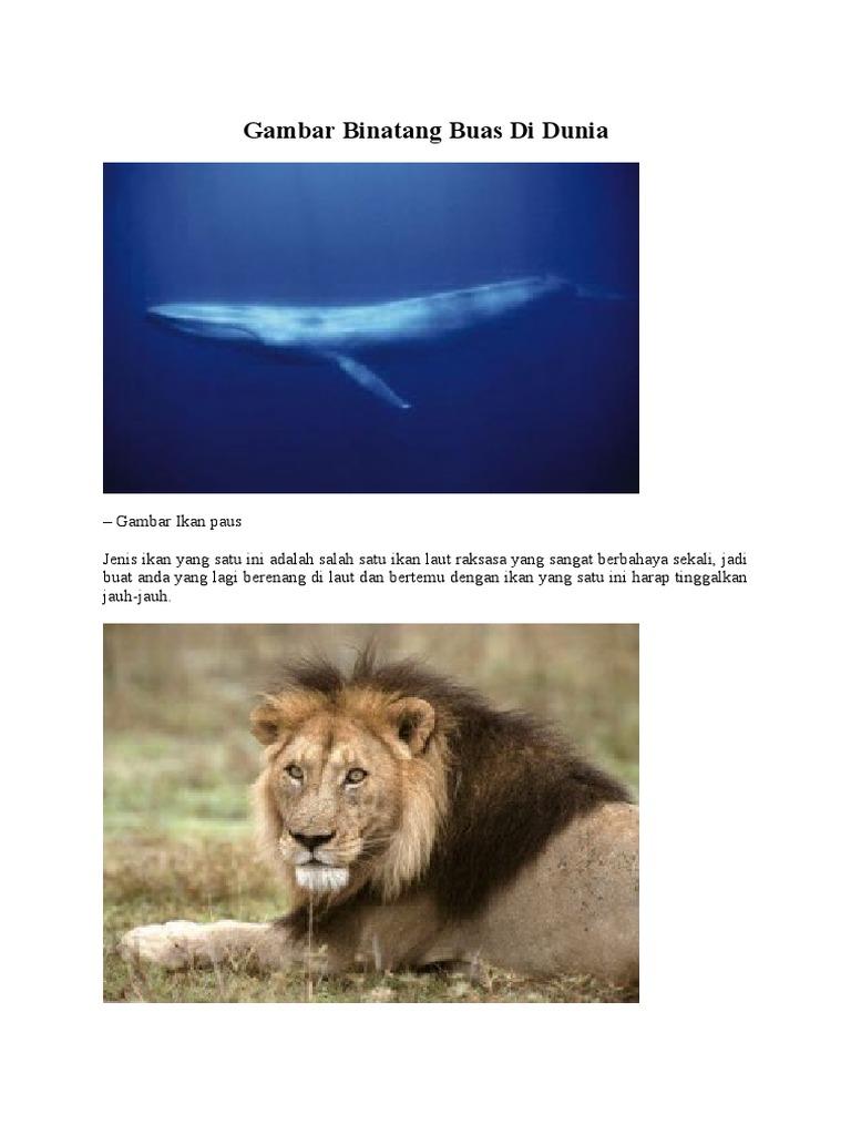 420 Koleksi Gambar Binatang Di Laut Terbaik