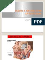 Absorcion y Secrecion Intestinal