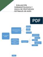 Evaluación Coproparasitologica y Patologica de Protozoos Intestinales En
