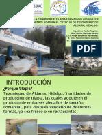 AC_14_Engorda de tilapaia PREPA.pdf
