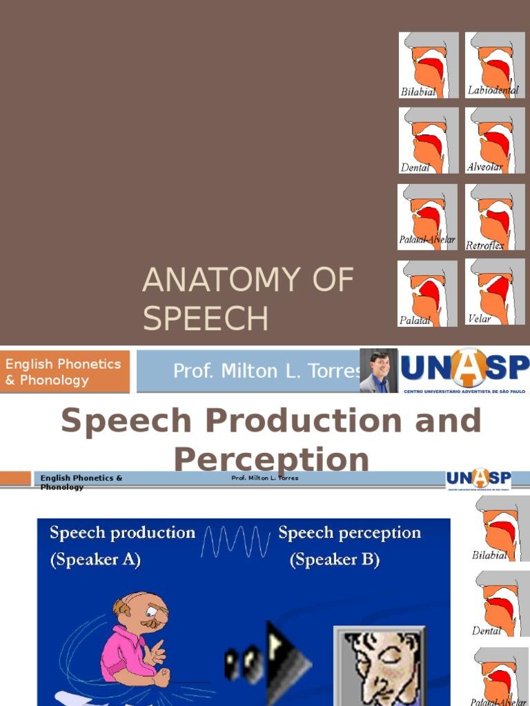Anatomy Of Speech English Phonetics Vowel Phonetics