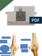 Fratura de Úmero Distal e Proximal