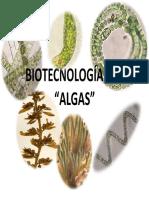 Biotecnologia Algas