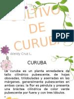 Cultivo de Curuba Jas