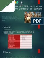 Paquetes Tecnologicos de Maiz en Mexico