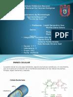 Guia de Problemas de Cadena Respiratoria y Fosforilacion Oxidativa