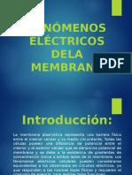 MEMBRANA-ELECTRICA