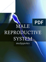 Male Reproductive System Sample