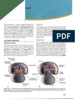 Embriologia Del Sistema Urogenital