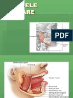 Anatomia Clinica a Glandelor Salivare