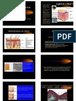 Sistema Tegumentar.pdf