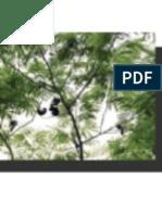 Bosque Protector Prosperina