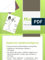 exposicion micologia - mucor