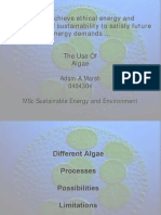 A Study Into the Cultivation of Algae - Presentation - 2008