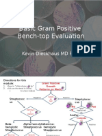 Gram Positive Evaluation