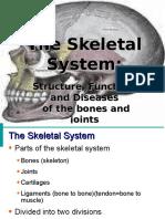 skeletalsystem