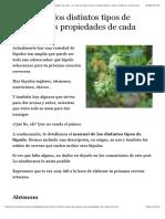 Manual de los distintos tipos de lúpulo (y las propiedades de cada uno)