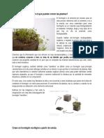 Hormigon Biodegradable