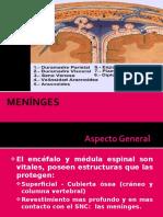 Meninges 2013