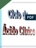 00713 - Ciclo do µcido C¡trico.pdf
