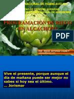 Programacion Riego Alcachofa