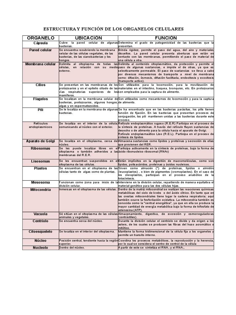 ESTRUCTURA Y FUNCIÓN DE LOS ORGANELOS CELULARES