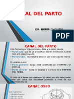 1. Canal Del Parto