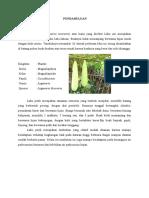 Anatomi Tumbuhan Labu Putih