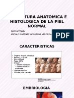 Expo2 _estructura Anatomica Histologica Epidermis 20-7
