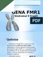 Gena FMR1 (2)