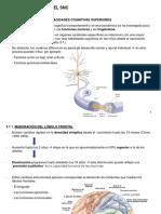 CAP 3_DESARROLLO SNC.pdf