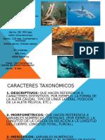 Caracteristicas Generales Para Taxonomia de Peces1