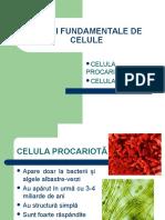 Tipuri Fundamentale de Celule