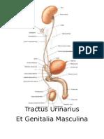 Skill Lab 1. Anatomi Urogenital