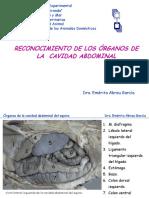 reconocimientodelosorganosabdominales-121009172350-phpapp01