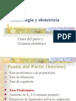 10- Fases Del Parto (Bovino) y Examen Obstétrico